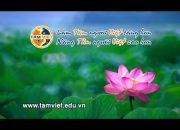Giới thiệu về Tâm Việt đào tạo, huấn luyện kỹ năng mềm, kỹ năng sống