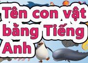 Tên 300 con vật bằng tiếng Việt và tiếng Anh