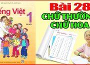 Tiếng việt lớp 1 Bài 28 Phân biệt Chữ Thường Chữ Hoa – Dạy Bé Học Bảng Chữ Cái Tiếng Việt