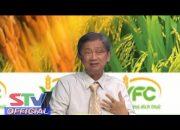 STV – Thời tiết như hiện nay Lúa có bị tái nhiễm bệnh lem lép hạt không? I Tọa đàm VFC